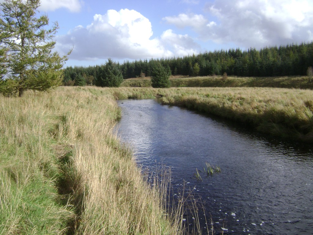Water Vole and Otter Habitat