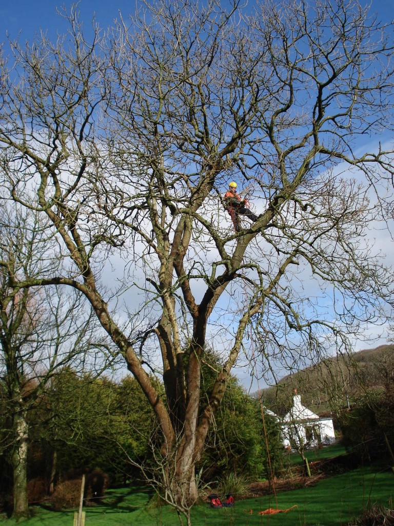 Bat survey of tree from rope and harness
