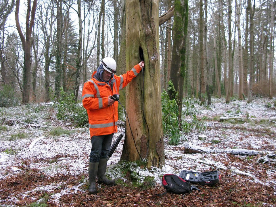 Using an endoscope to inspect a Leisler's bat tree roost