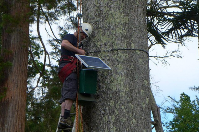 Erecting a remote bat detector in a tree